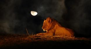 בעלי חיים רבים פיתחו התאמות שעוזרות להם לתפקד בחשכה