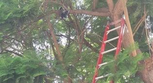 צפו: הכבאים חילצו את היונה שנתקעה בעץ