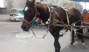 הסוסים ברחובות בית שמש