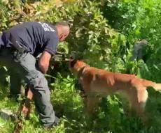 הכלבה המשטרתית 'לוקה' איתרה רובה. צפו