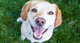 צפו: הכלב שיעשה הכל כדי לגרום לתינוק לחייך