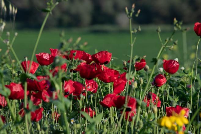 ערב חג האביב: הפריחה היפה בצפון הארץ