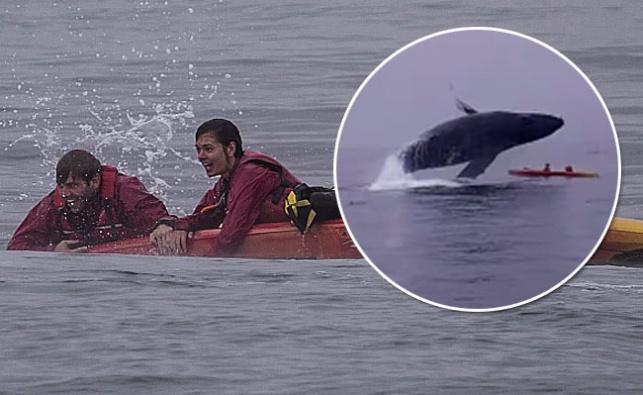 אימה: לוויתן ענק התנפל על קיאק באמצע שייט