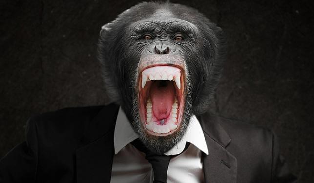 הזוי: החליטו להוריש את הונם לקוף