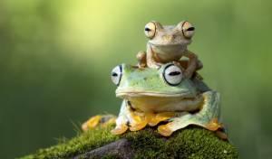 לבלוע את ה'צפרדע'   // הרב אבי אברהם