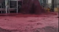 גייזר, ונחל אדום: 50,000 ליטרים יין נשפכו