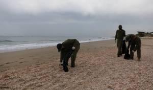 חיילים מסייעים אתמול בניקוי החופים מהזפת