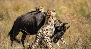 הספארי בקניה: סיור מרתק דרך עדשת המצלמה
