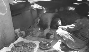 אפיית פיתות בישוב תרשיחא בגליל העליון, ב-1976