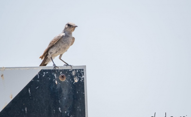 מרהיב: הציפורים והחיות במזרח רמת הגולן