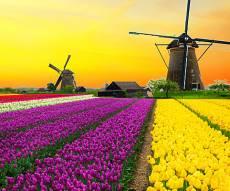 צפו בווידאו: חמישה דברים שלא ידעתם על הולנד