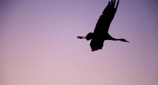 """העופות הנודדים - ב""""עמק החולה"""" הקסום"""