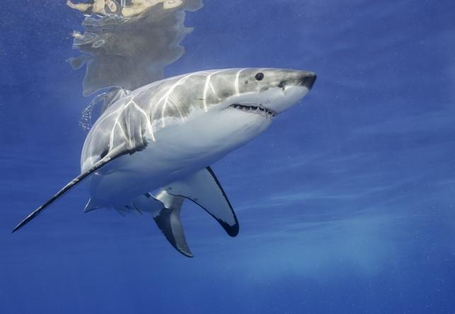 דגו כרישים ללא אישור וישלמו אלפי שקלים
