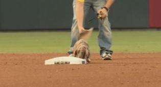 צפו: הכלב הקטן שיגע את שחקני הבייסבול