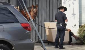 אילוסטרציה - בת 53 רכבה על סוסה בשכרות ונעצרה