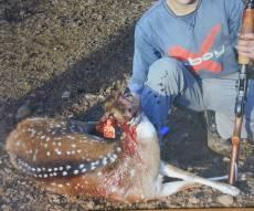 19 נעצרו בחשד לצייד וסחר אכזרי בחיות בר