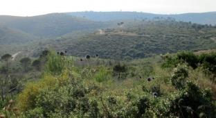 סיור ליערות הכרמל דרך עדשת המצלמה