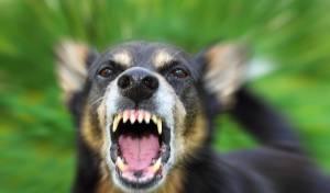 נהג מיניבוס שהותקף על ידי כלב יפוצה ב-74,660 אלף שקל