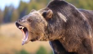 דוב קפץ לביקור בבית מרקחת • צפו