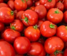 עגבניות - לקראת החגים: צפוי מחסור חמור בעגבניות