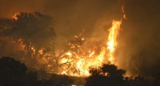 האש משתוללת ביערות קליפורניה