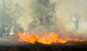 ממראות האש בנחל עוז