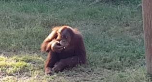 מעשנים בגן החיות: נתפס בעדשת המצלמה