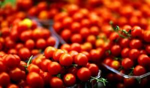 עגבניות שרי. גדולות ביחס לפיתוח החדש
