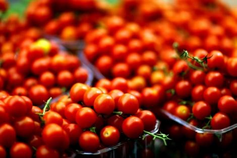 עגבניות שרי. גדולות ביחס לפיתוח החדש - פיתוח ישראלי חדש מציג - עגבנייה זעירה