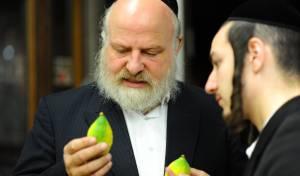 האתרוג המכוער  והמושלם // עמוס ביסמוט