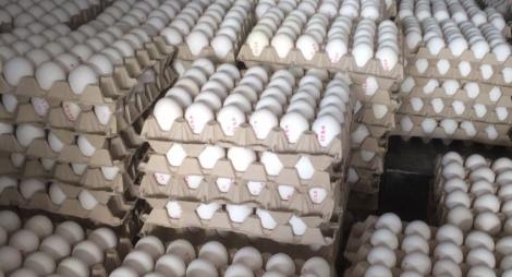 אושר יבוא מאה מיליון ביצים בפטור ממכס