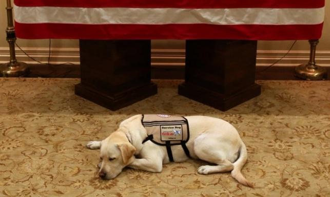 """הכלב ריגש את ארה""""ב: מיאן להיפרד מבוש"""