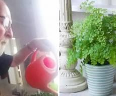 האב האלמן משקה את עציצי הפלסטיק - אשה שנפטרה מסרטן היתלה בבעלה במשך 5 שנים