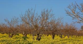 פריחה ליד גן יבנה - התחזית: יהיה נאה וחם מהרגיל לעונה