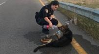 הכלבה שותה - השוטרים הצילו כלבה שאותרה במצב קשה