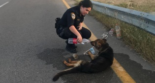 הכלבה שותה