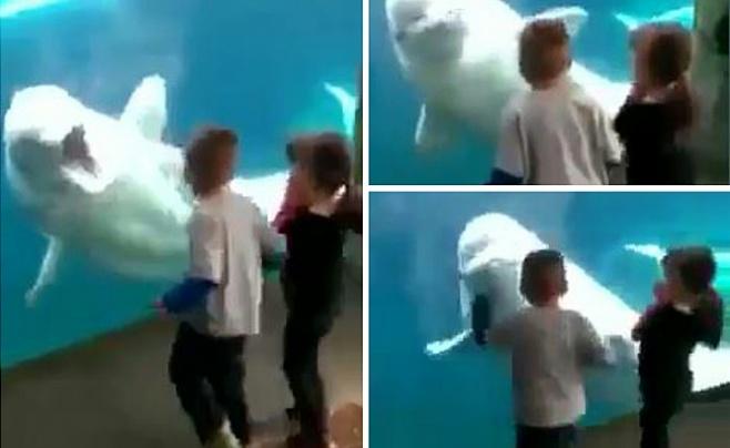 הלוייתן שנהנה להבהיל את הילדים • וידאו