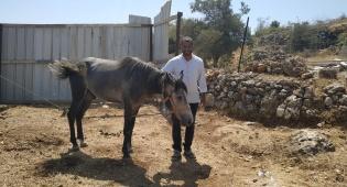 משעשע: תלמידים העניקו סוס למורה הדתי