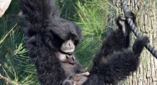 הספארי מחפש שם לקופיף החדש שנולד