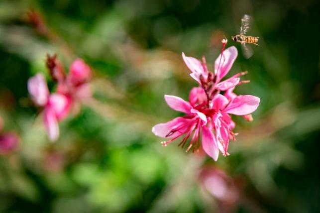 החום מוציא גם את הדבורים שמחפשים צוף