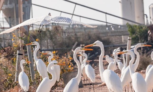 ציפורים במעגן מיכאל
