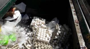 כ-10 אלף ביצים הוחרמו והושמדו בתל אביב