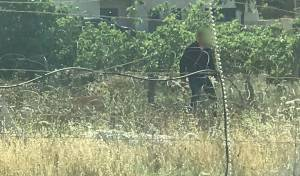 """לוחמי מג""""ב עצרו שני פלסטינים שיידו אבנים"""