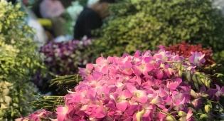 סיור דרך המצלמה לשוק הפרחים של בנגקוק