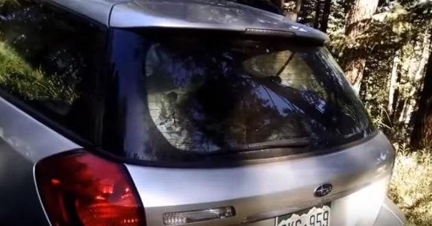 נהג למופת: צפו בכניסה אלגנטית של דוב לרכב חונה