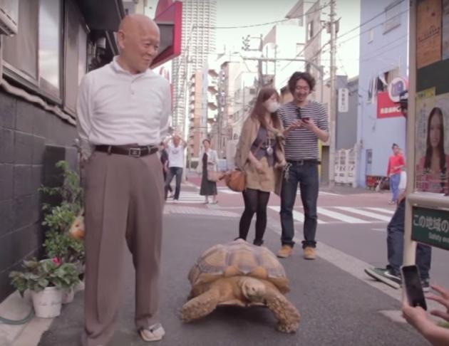 מדהים: ישיש יפני מטייל עם צב ברחוב