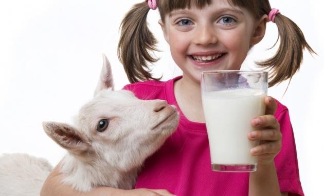 כל מה שחשוב לדעת על חלב פרה וצאן