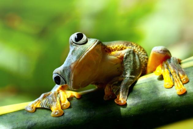 צפרדע..