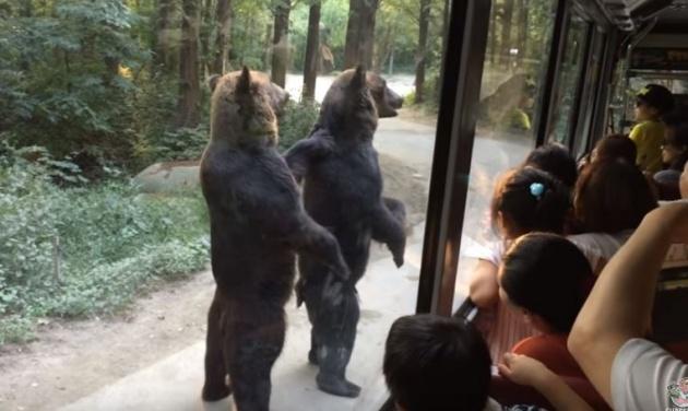 ויראלי: שני דובים במחווה מרגשת לתיירים