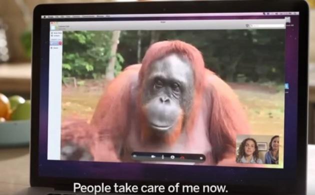 מדהים: כבדת שמיעה מדברת עם גורילה בשפת הסימנים
